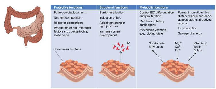 benefits of gut bacteria