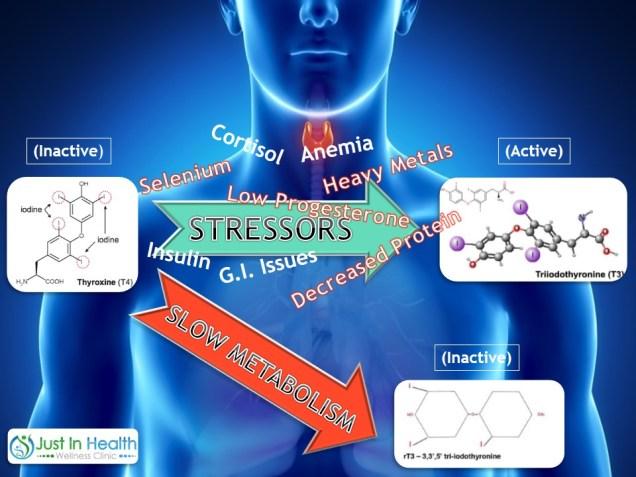 thyroid conversion