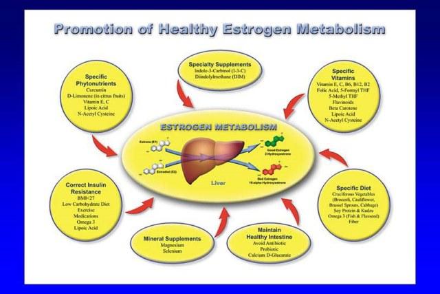 estrogen-metabolism