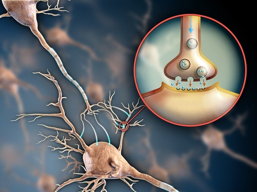 amino acids and brain transmitters