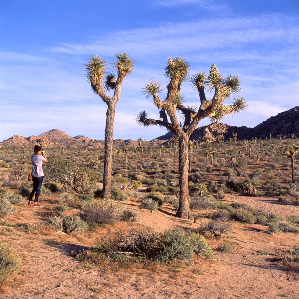 Zab in Joshua Tree National Park