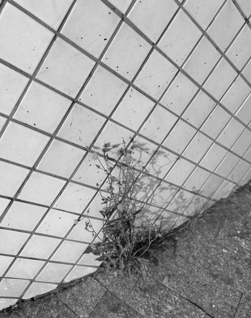 Série Jardim das Delícias : Fase 2 - 33, Justino, Fotografia, 2020.