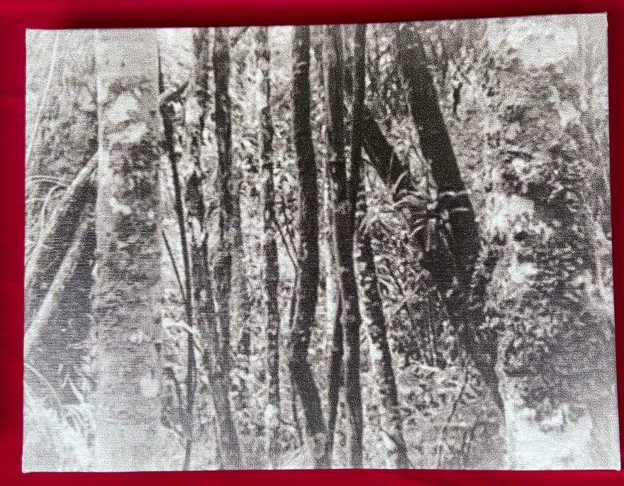 Justino, Fotografia digital impressa em tela, 30 cm x 40 cm2021.