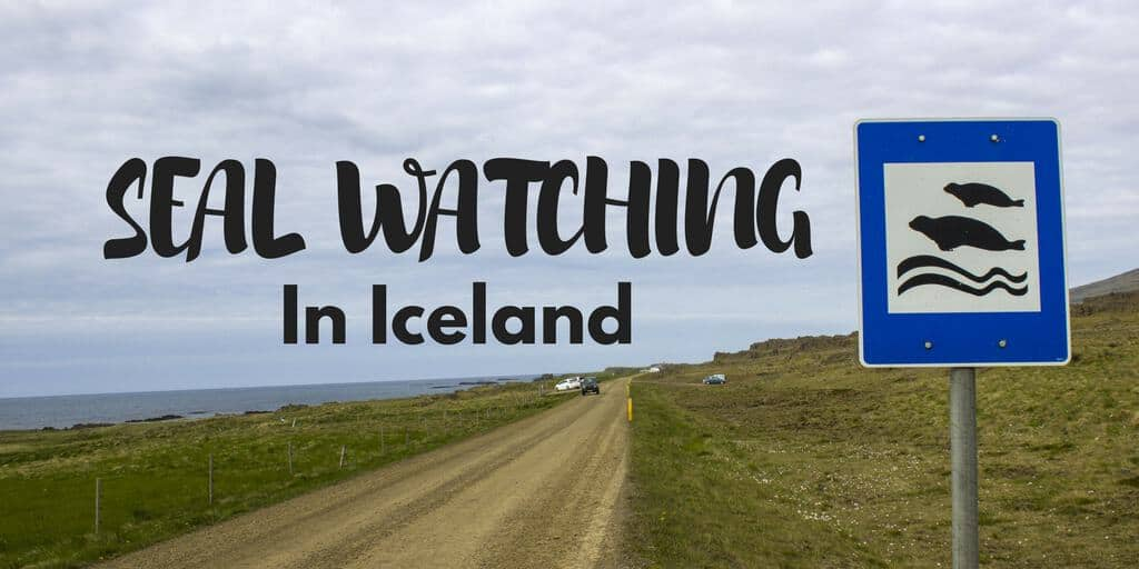 Seal Watching in Iceland – Hvammstangi and Vatnsnes Peninsula