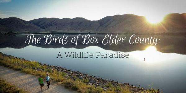 Birds of Box Elder County - A Wildlife Paradise - Justin ...