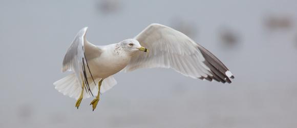 Seagull Leadership