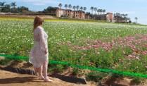 Flower fields14 (1 of 1)