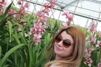 Flower fields25 (1 of 1)