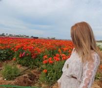 Flower fields7 (1 of 1)