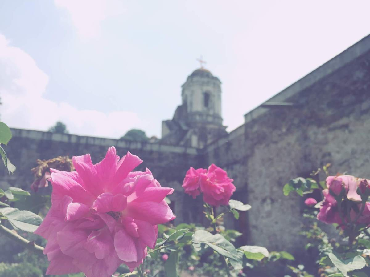 Pink Flowers at an Ex Convent