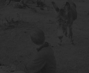 A burro stares down William