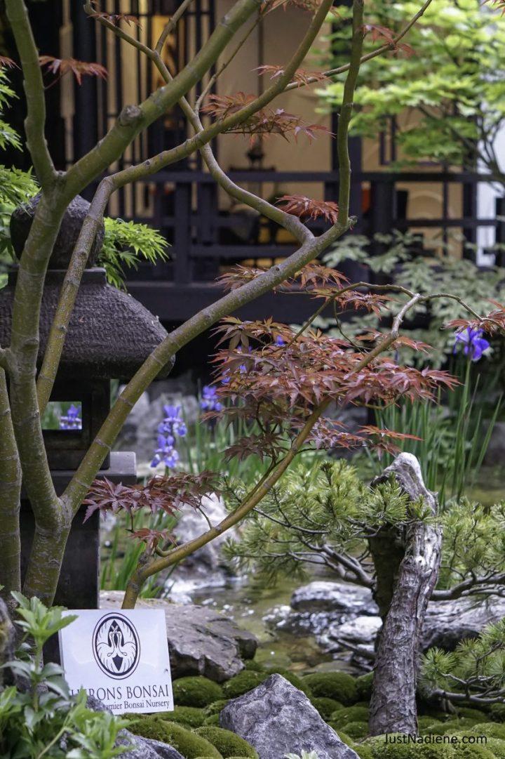 RHS Chelsea Herons Bonsai