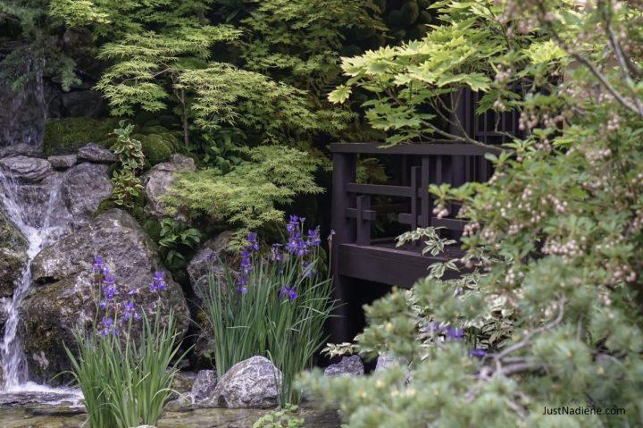 RHS Chelsea Japanese Garden