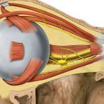 5 natural ways you had no idea could improve your eyesight