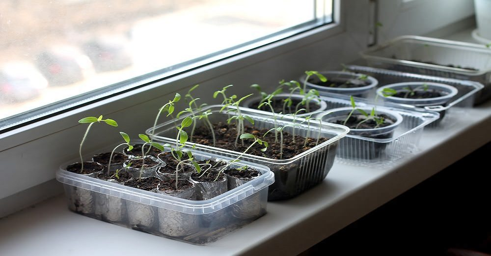 How to grow vegetables indoors.