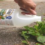 12 Amazing Vinegar Uses In The Garden