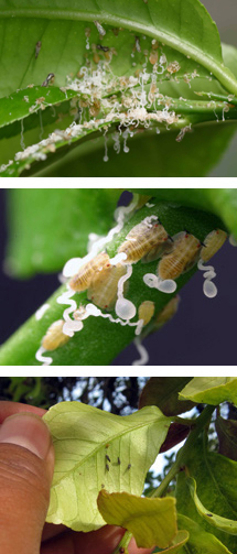 images-the-insect