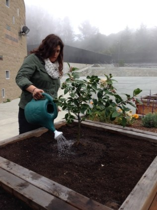 Audrey Roderick, program directorof Urban Sprouts is watering the new trees.