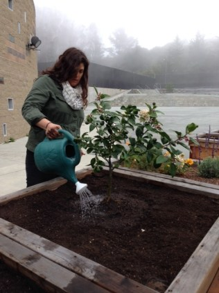 Audrey Roderick, program director of Urban Sprouts is watering the new trees.