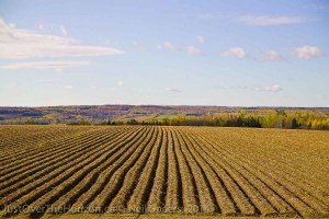 Agricultural field, New Brunswick