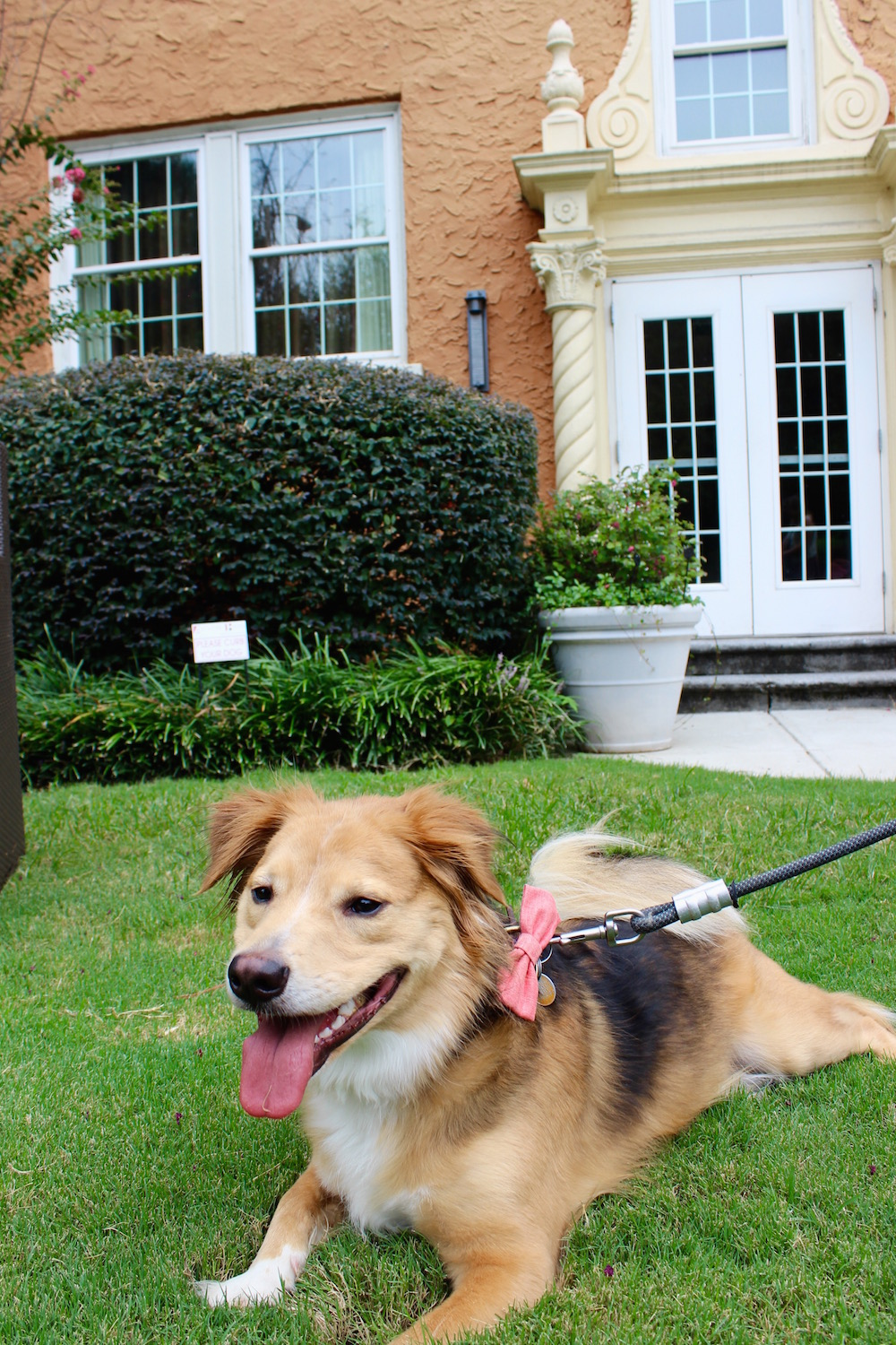 Dog Friendly Hotel in Atlanta | Just Peachy Blog