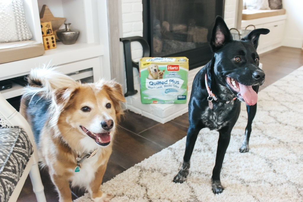 Dog Potty Training Hartz Dog Pads | Just Peachy Blog