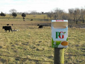 PG Tips down on the farm.
