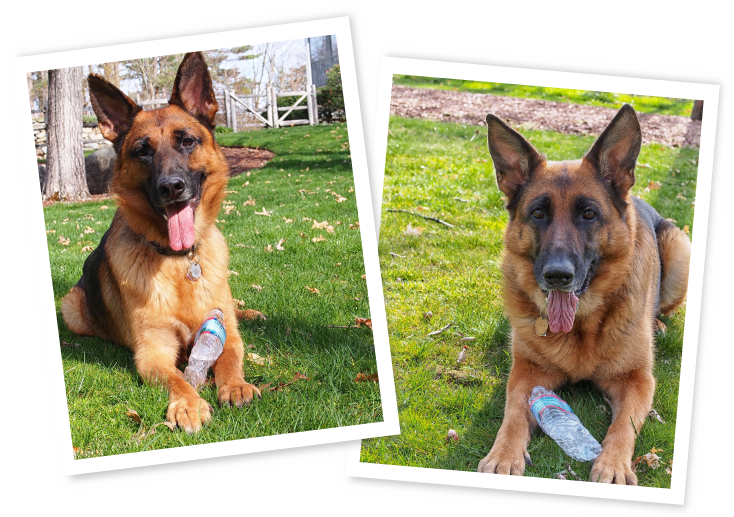 German Shepherd portraits with water bottle