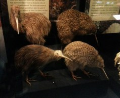This is what kiwis look like.