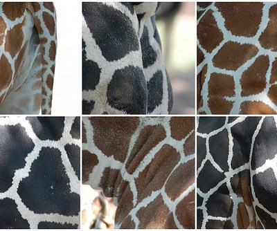 Seeing Spots at the St. Louis Zoo