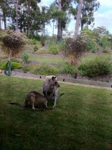Vista dalla finestra di casa in New South Wales   Australia