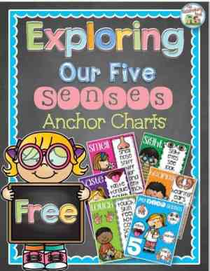 five senses anchort chart freebie