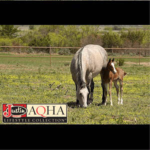 AQHA Womens Collection