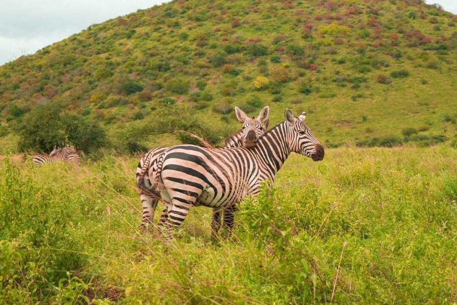Tsavo West National Park.