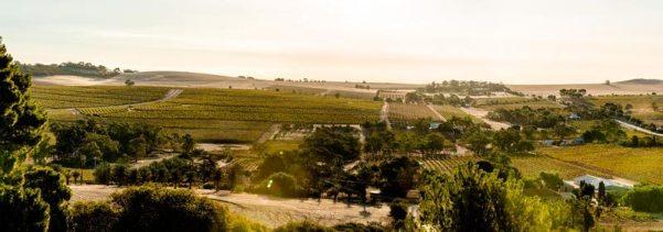Seppeltsfield-Barossa-landscape