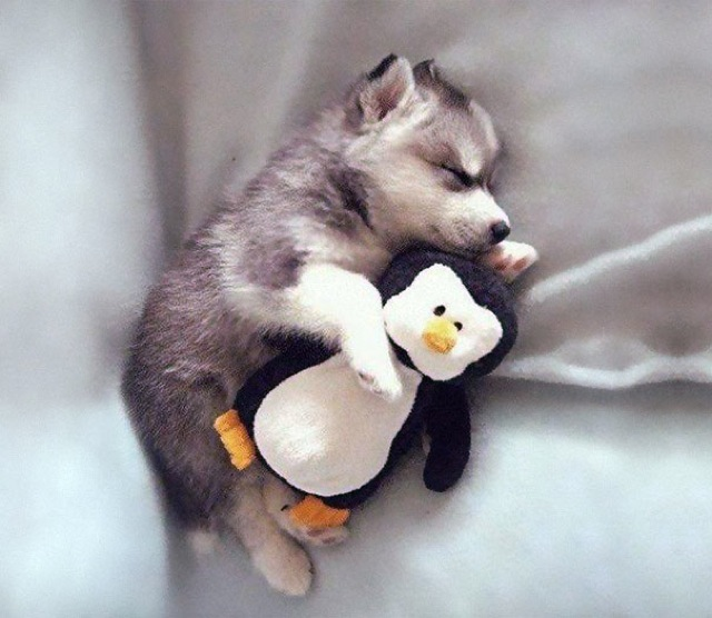 Image result for adorable animals