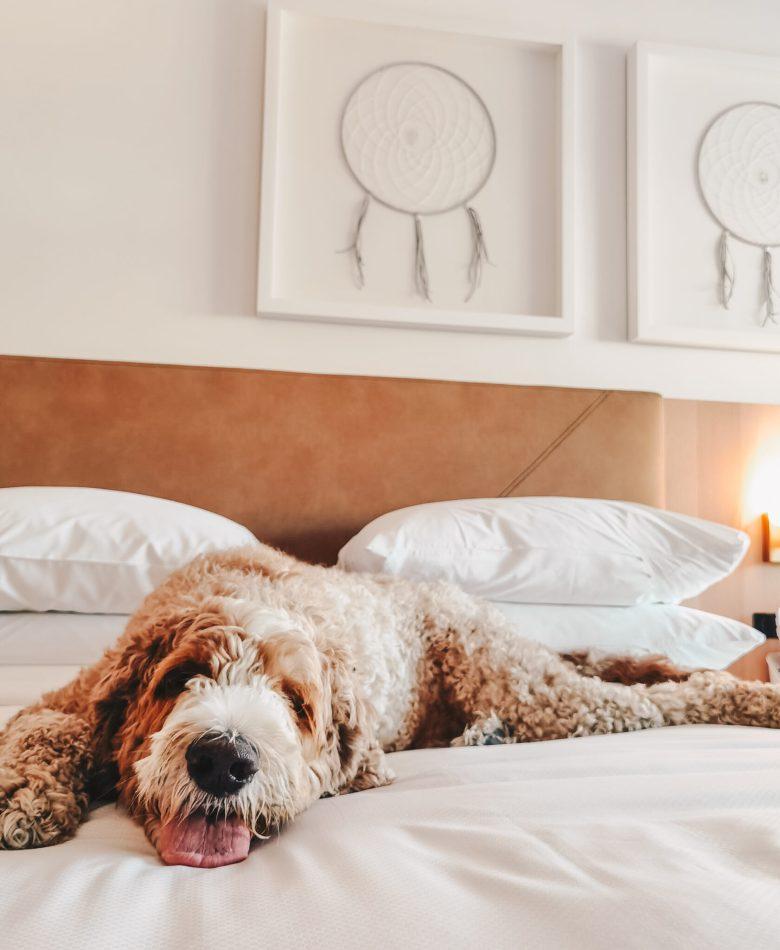 Delta Hotels by Marriott Kamloops - Dog-Friendly - Pet Friendly