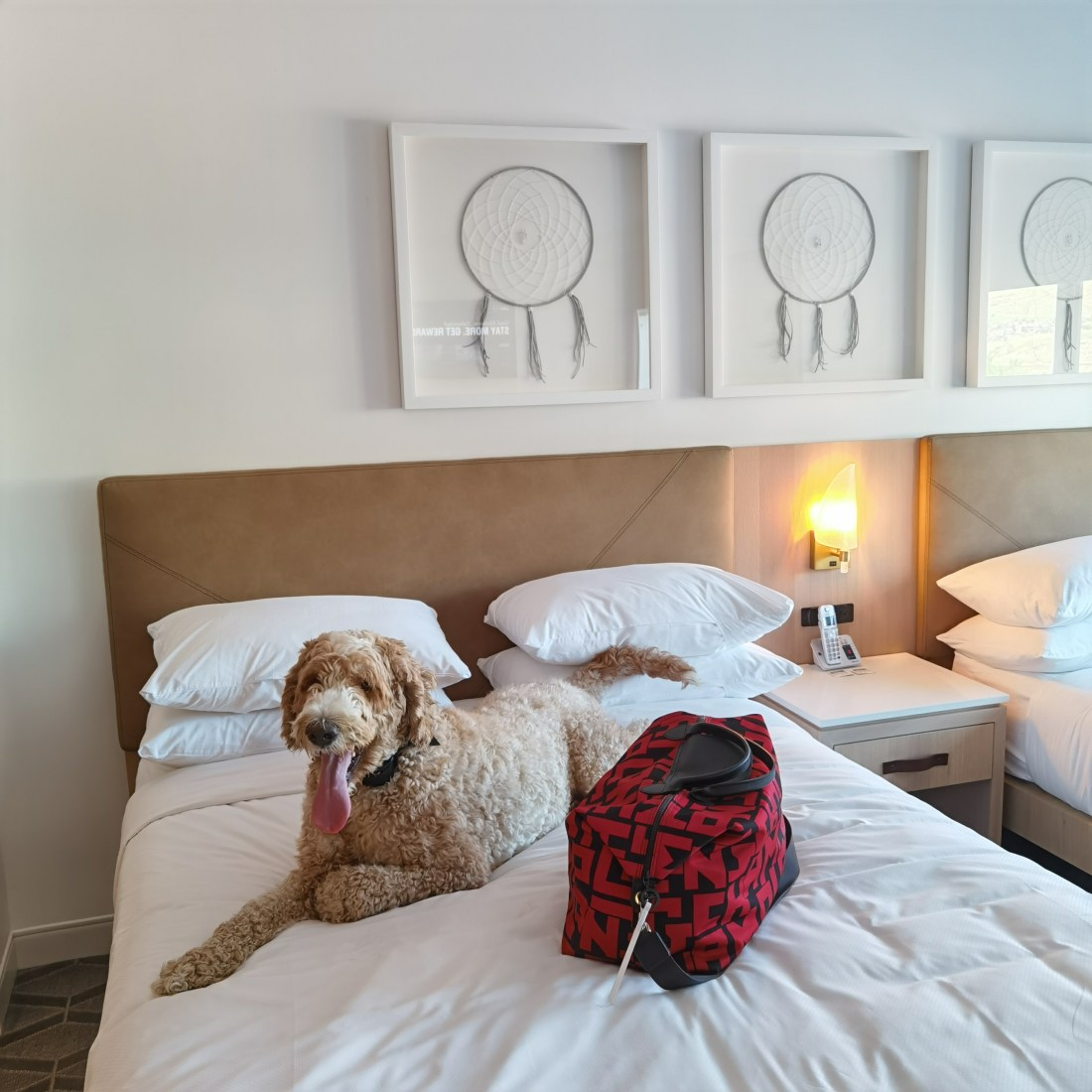 Delta Hotels by Marriott Kamloops - Pet Friendly
