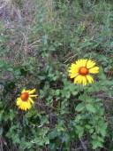 11 Wild Flowers