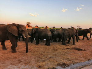 Camping With The Elephants