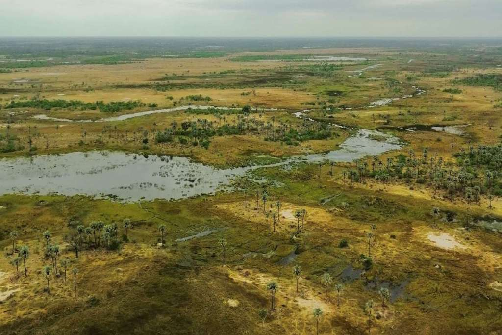 Looking out over the waters of the Okavango Delta