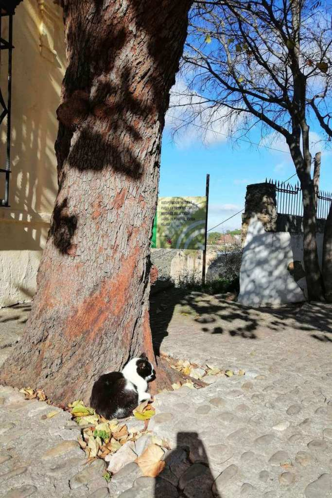 Local cat sleeping below a tree in Ronda