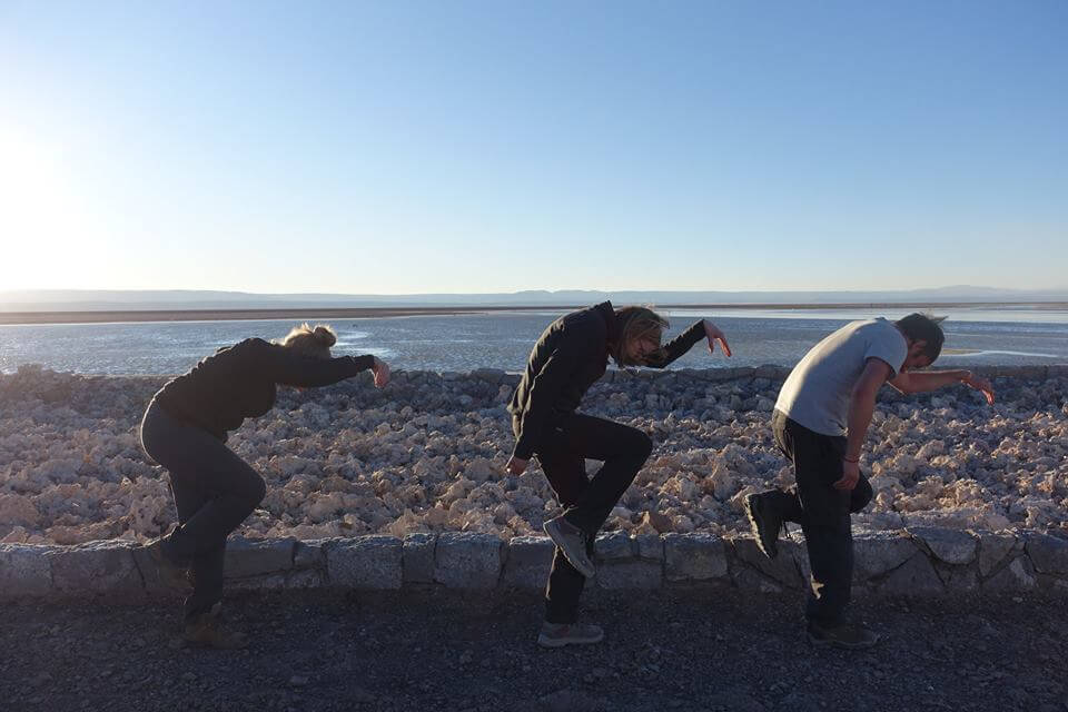 Three strange looking flamingos