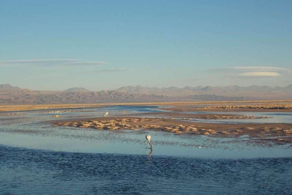 Flamingos at the reserve in the Atacama Desert
