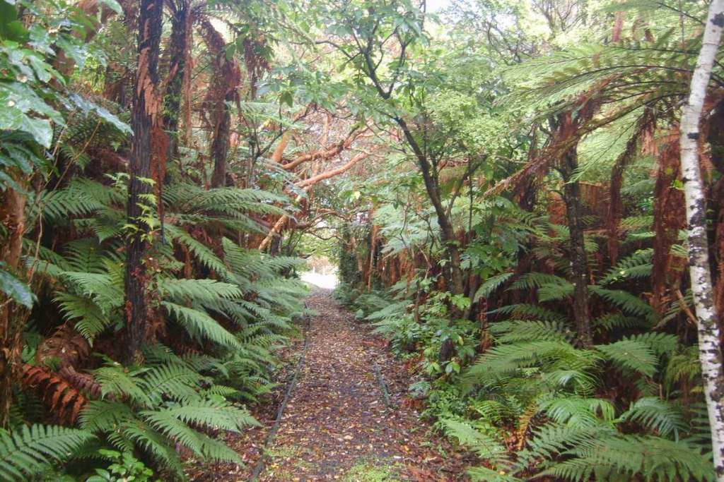 Hiking trail through the woods, why visit New Zealand