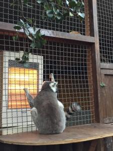 神戸どうぶつ王国ストーブで暖まる猿