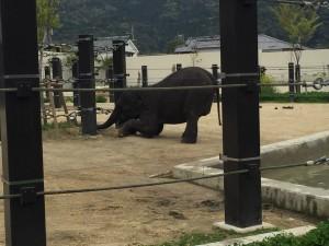 京都市動物園 しゃがみこむ象
