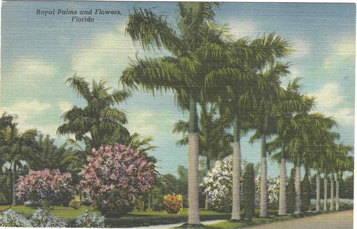 Royal Palms and Flowers