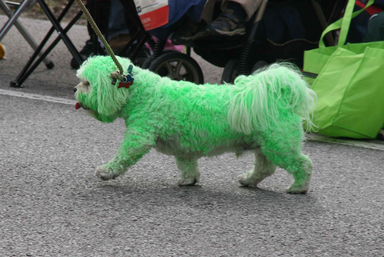 greendog_parade_sm