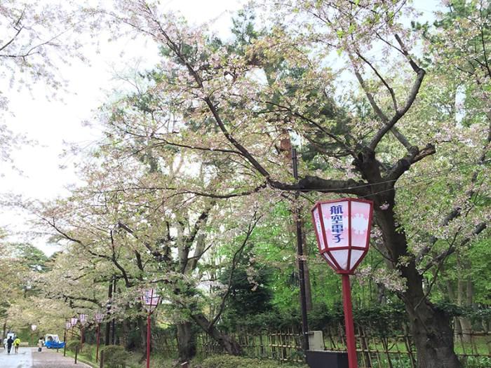 弘前城の桜は散った